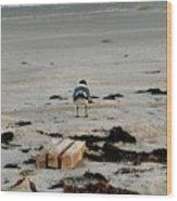 Seagull 5 Wood Print