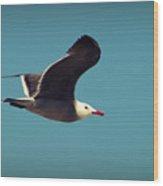 Seagull Aflight Wood Print