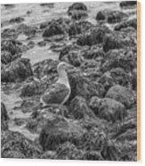 Seagull And Rocks Bw Wood Print