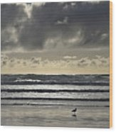 Seagull At Cannon Beach Wood Print