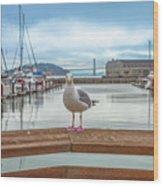 Seagull At Pier 39 Wood Print