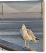 Seagull At Ravenel Bridge Wood Print