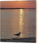 Seagull At Sunset Wood Print