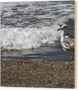 Seagull At The Beach Wood Print