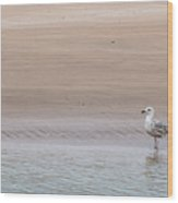 Seagull At The Waters Edge Wood Print