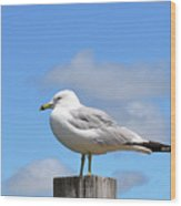 Seagull Beach Art - Sitting Pretty - Sharon Cummings Wood Print