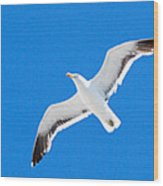 Seagull Blue Wood Print by Cesar Marino