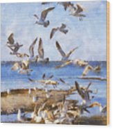 Seagull Convention Wood Print