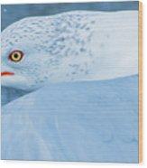 Seagull Departing Close-up Wood Print