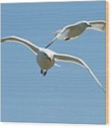 Seagull Doubles Wood Print