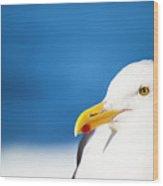 Seagull Face Profile Close Up Wood Print