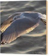 Seagull Flight Wood Print by Dustin K Ryan