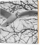 Seagull Fly By Trees Wood Print