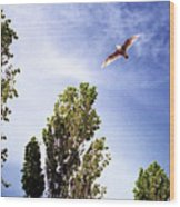 Seagull Fly By Wc 2 Ae  Wood Print