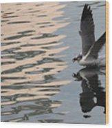 Seagull Fun Wood Print
