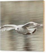 Seagull Glide Wood Print