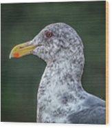 Seagull Head Shot Wood Print