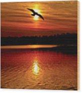 Seagull Homeward Bound Wood Print
