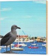 Seagull In Boston Harbor Wood Print