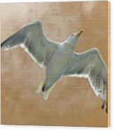 Seagull In Flight 1 Wood Print