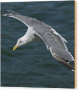 Seagull  In Flight Wood Print by Randall Ingalls