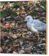 Seagull In The Fallen Leaves Wood Print