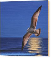 Seagull In The Moonlight Wood Print