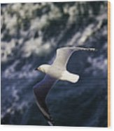Seagull In Wake Wood Print