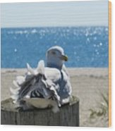 Seagull In Wind Wood Print