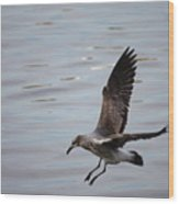 Seagull Landing Wood Print by Carol Groenen