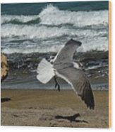 Seagull Landing Hutchinson Island, Fl Wood Print