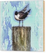 Seagull - Laughing Gull Pop Art  Wood Print