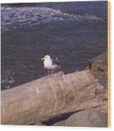 King Of The Seagulls Wood Print