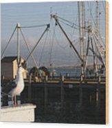 Seagull Morro Bay California Wood Print