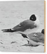 Seagull Nap Time Wood Print