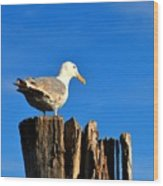 Seagull On A Dock 2 Wood Print