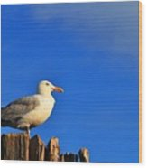 Seagull On A Dock Wood Print