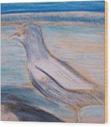 Seagull  On Seashore Wood Print