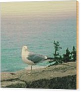 Seagull On Stone Wall Wood Print