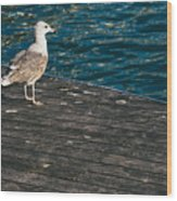 Seagull On The Pier Wood Print