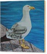 Seagull On The Shore - Gaviota En La Costa Wood Print