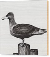 Seagull Portrait On Pier Piling E3 Wood Print
