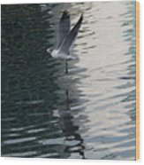 Seagull Reflection Over Blue Bay Wood Print