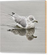 Seagull Reflections Wood Print