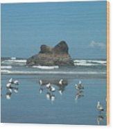 Seagull Reflections Wood Print