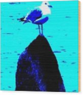 Seagull Scout Wood Print