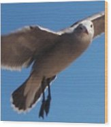 Seagull Sees Me Wood Print