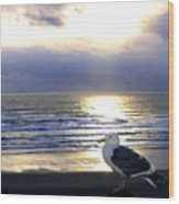 Seagull Sentinel Wood Print