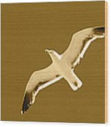 Seagull Sepia Wood Print by Cesar Marino