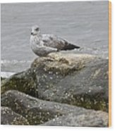 Seagull Sitting On Jetty Wood Print